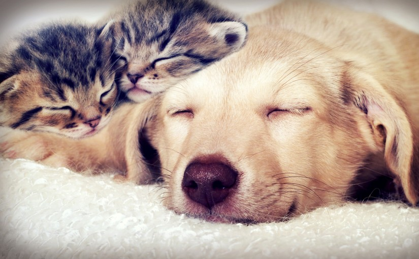 Titta mer på söta djur!